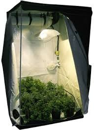 growbox Cannabis anbauen indoor