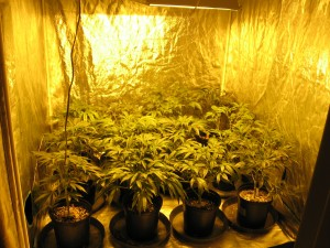 indoor-grow